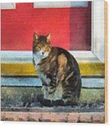 Pets - Tabby Cat By Red Door Wood Print