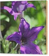 Petunia Hybrid From The Sparklers Mix Wood Print
