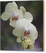 Phal Ming Chao Dancer 0754 Wood Print