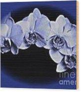 Phalaenopsis 2 Wood Print