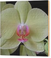 Phalaenopsis Fuller's Sunset Orchid No 2 Wood Print