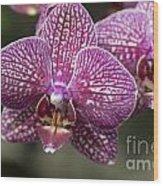 Phalaenopsis Helen Alice Mary 2220 Wood Print