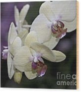 Phalaenopsis Ming Chao Dancer   8585 Wood Print