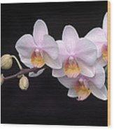Phalaenopsis Orchid Wood Print