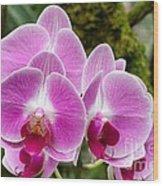 Phalaenopsis Orchid Hawaii All Profit Benefit Hospice Of The Calumet Area Wood Print