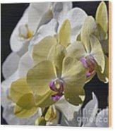 Phalaenopsis Orchids 2777 Wood Print