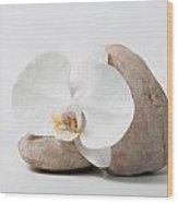Phalenopsis And Rock 83 Wood Print