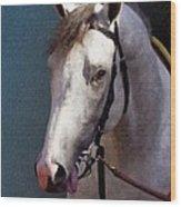 Phantom Lover - Portrait Of A Race Horse Wood Print