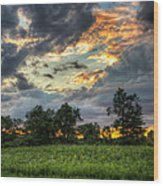 Phantom Sunset Over Sunflower Fields  Wood Print