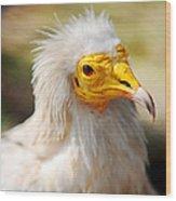Pharaoh Chicken. Egyptian Vulture Wood Print