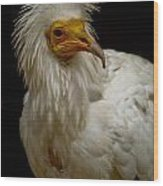 Pharaoh's Chicken Wood Print