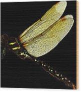 Phi Wood Print