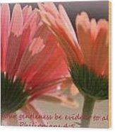 Philippians 4 5 Gerber Daisies Wood Print