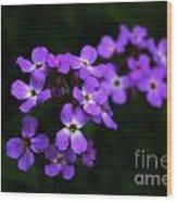 Phlox Blossoms Wood Print