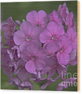 Phlox Nicky Wood Print