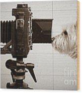Pho Dog Grapher - Ground Glass View Wood Print