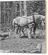 Photograph Of Horses Pulling Logs In Maine Forest Wood Print