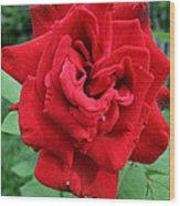 Photograph Reddest Of Roses Wood Print