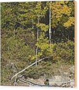 Photographer On A Northern Lake Wood Print
