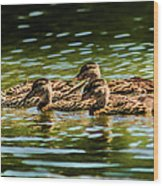 Photography Painting Of Mother And Her Ducklings Wood Print