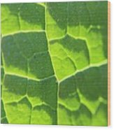 Photosynthesis  Wood Print