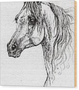 Piaff Polish Arabian Horse Drawing 1 Wood Print