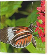 Piano Key Butterfly Wood Print