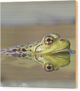 Pickerel Frog Nova Scotia Canada Wood Print