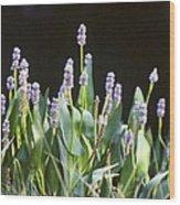 Pickerel Weed Wood Print