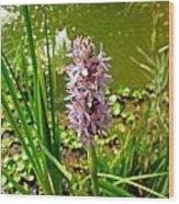 Pickerel Weed Plant Wood Print