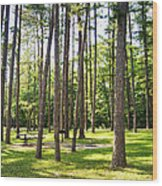 Picnic In The Pines Wood Print