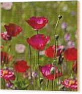Picture Perfect Poppies Wood Print