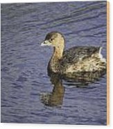 Pied-billed Grebe Wood Print