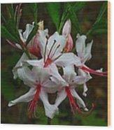 Piedmont Azalea Wood Print