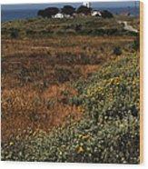 Piedras Blancas Lighthouse Wood Print