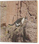 Pierre The Mountain Climber Wood Print