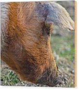 Pig Profile Wood Print