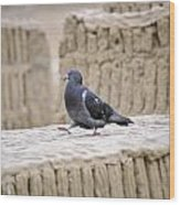 Pigeon At Huaca Pucllana In Lima Peru Wood Print