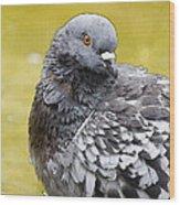 Pigeon Bath Wood Print