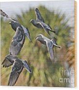 Pigeon Brigade Wood Print