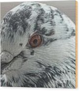 Pigeon Close-up Wood Print