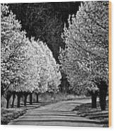 Pigeon Mountain Dogwoods In Black And White Wood Print