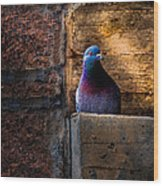 Pigeon Of The City Wood Print
