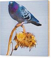 Pigeon On Sunflower Wood Print