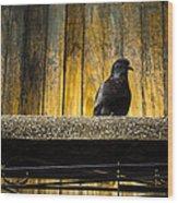 Pigeon On The Balcony Wood Print