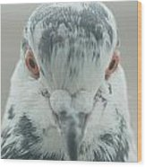 Pigeon Portrait En Face Wood Print