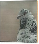 Pigeon Portrait Wood Print