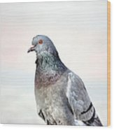 Pigeon Portrait Wood Print