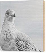 Pigeon Pride II Wood Print