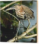 Pigeon Toed Heron Wood Print